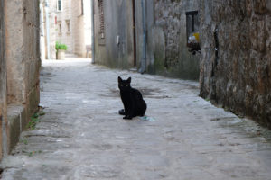 An adorable little black cat on the old road through Perast