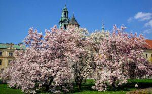 Spring city breaks