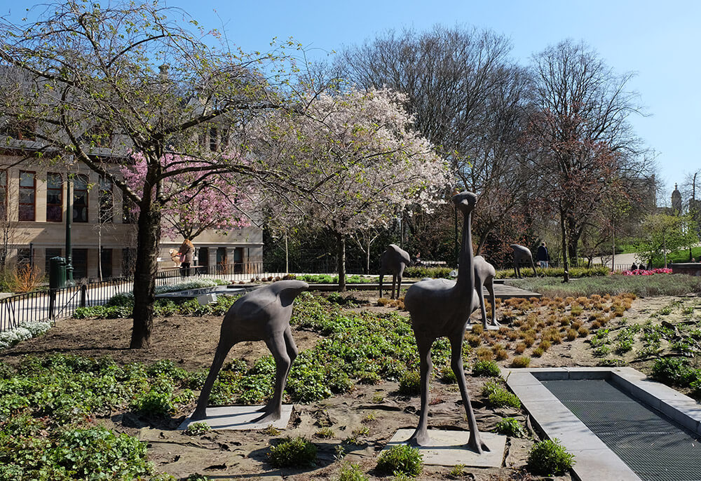 The ostriches in Leopold Park aren't a political statement but rather a hint at the zoo that used to be on the site in the 19th century
