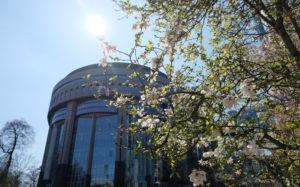 Spring blossom outside the European Parliament in Brussels
