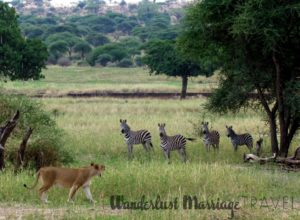 Alex took a safari in Tanzania for her 40th birthday