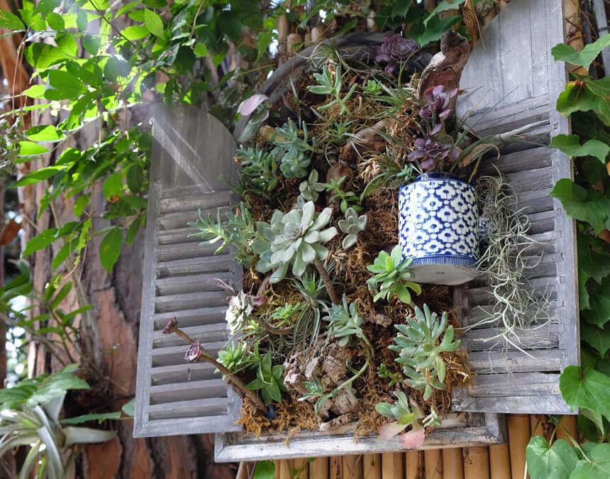 Part of la Mortella's collection of succulents