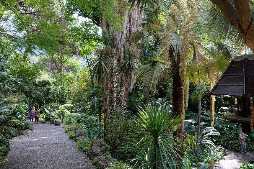 Walking through the Valley Garden at la Mortella