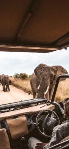40th birthday safari